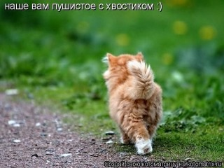http://i76.fastpic.ru/big/2015/1206/bd/2a7c21423a7ec67235e458cea8cc82bd.jpg