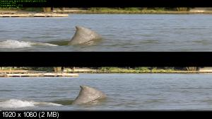 Челюсти 3 3D / Jaws 3-D 3D ( by Ash61) Вертикальная анаморфная